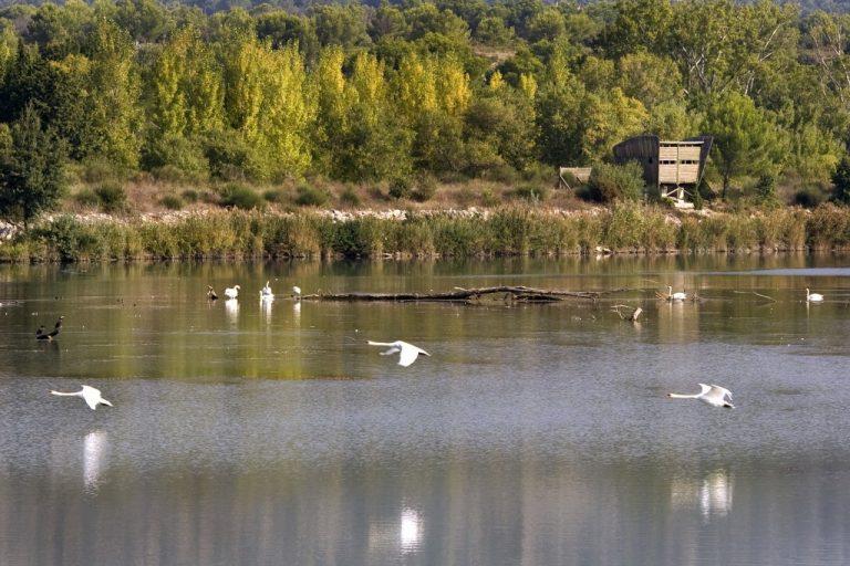 Plan d'eau avec des oiseaux